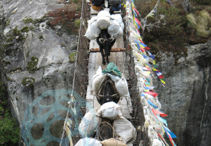 Yaks crossing bridge